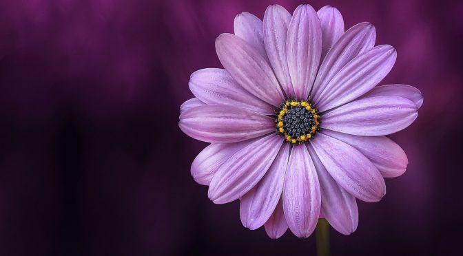 5 lépés arra, hogyan hozzuk vissza az eleganciát az életünkbe